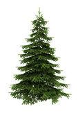 Spruce trädet isolerad på vit — Stockfoto
