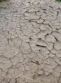 The dry earth — Stock Photo