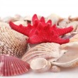Scallop shell — Stock Photo
