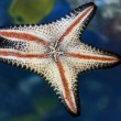 Stock Photo: Star Fish