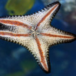 Star Fish — Stock Photo #1871742