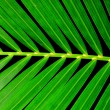Palm Leaf — Stock Photo #1889745