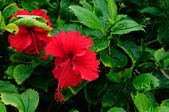 Tropical Flowers — Stockfoto