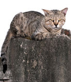 CAt on the wall — Stock Photo