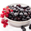 Frozen red and black currants — Stock Photo #1777025
