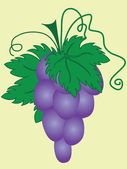 Ripe purple grapes — Vector de stock
