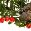 Isolated pine branch with cone. christmas — Foto de Stock