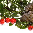Isolated pine branch with cone. christmas — Stock Photo #1745043