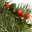 Isolated pine branch with cone. christmas — Stock Photo #1745061