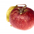 Isolated paradise. red apple on the branch - Stock Photo