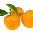 Mandarin, calamondin - Stock Photo