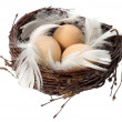 Stock Photo: Nest with eggs and feathers