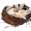 Nest with eggs and feathers - Stock Photo
