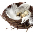 Nest with eggs and feathers — Stock Photo #1755615