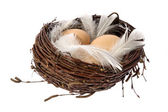 Nest with eggs and feathers — Stock Photo