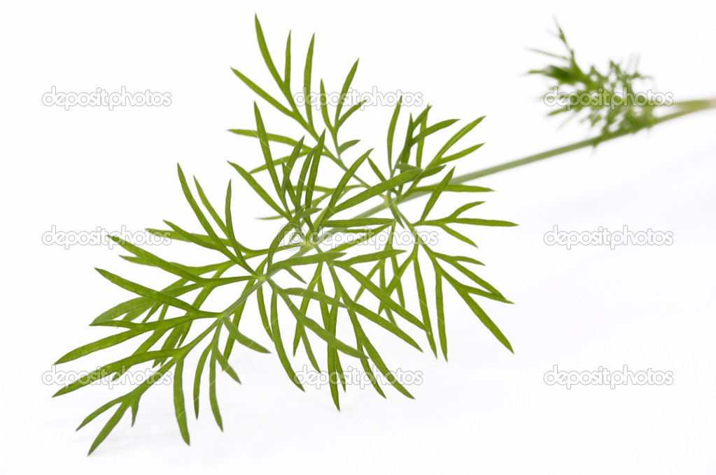 Green dill. macro — Stock Photo #1751403
