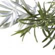 Fresh herbs. rosemary and lavender — Stock Photo