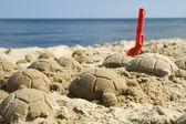 砂のカメ — ストック写真