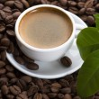 Fresh coffee with coffee branch — Stock Photo