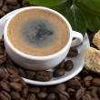 Fresh coffee with coffee branch - Lizenzfreies Foto