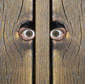 "Watching you"" — Stock Photo"
