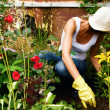 Garden Work — Stock Photo