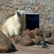 Polar Bear — Stockfoto #1774433