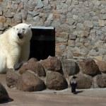 Polar Bear - 2 — Stock Photo
