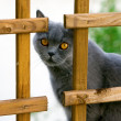 Staring Cat — Stock Photo