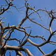 Stock Photo: Branches of dried up tree