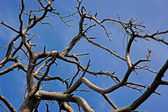 Branches of the dried up tree — Stock Photo