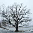 Winter tree — Foto de Stock