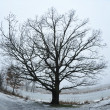 Winter tree — Stock Photo #1916407