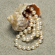 Snail with pearls on the beach detail — Stock Photo #1853582