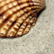 Sea Shell close-up — Stock Photo