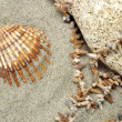 Sea Shell with stone and Necklace — Stock Photo #1853747