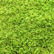 Green Moss backgound - Stock Photo