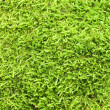 Green Moss backgound - 