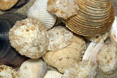 Beach Shell Arrangement — Stock Photo