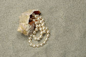 Shallow-water snail with pearls — Stock Photo