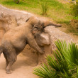 Elephant — Stock Photo #1773108