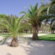 Palm tree avenue — Stock Photo