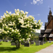 Stock Photo: Norway Church
