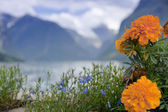 Flowers against a Lodalen valley — Stock Photo