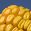 Yellow grains of corn - Stock Photo