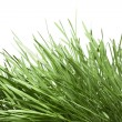 Green grass isolated on white — Stockfoto #1779202