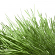 Stock Photo: Green grass isolated on white