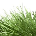 Zielona trawa na białym tle — Zdjęcie stockowe