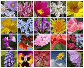 Цветочное панно. Коллаж — Stock Photo