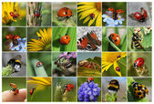Коллаж с насекомыми — Stock Photo